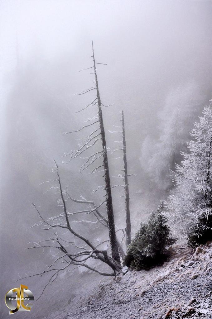 Grisaille dans la montagne