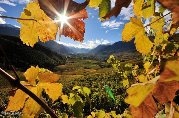 Le Valais, pays de la vigne et du vin