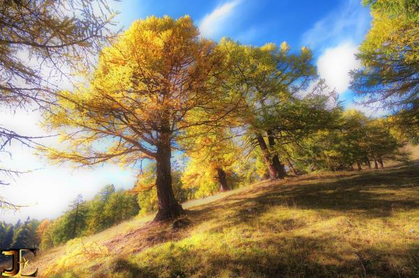 L'automne de Pointet