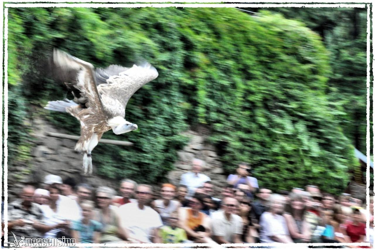 Le vautour est dans la place