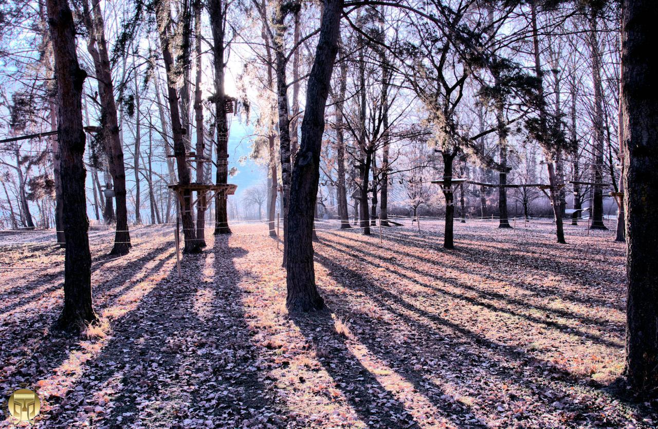 Forêt d'ombres