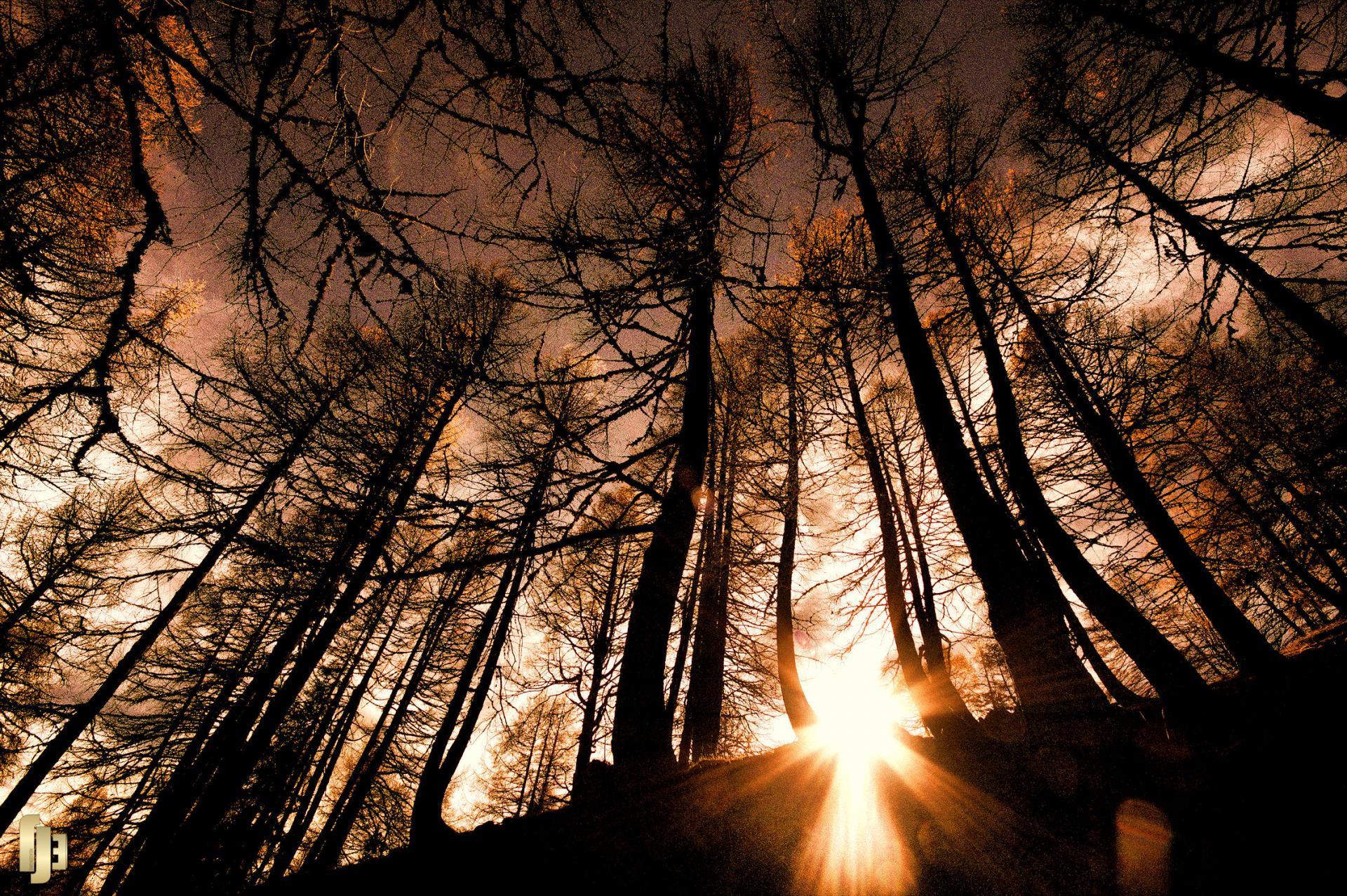 Magie de la forêt