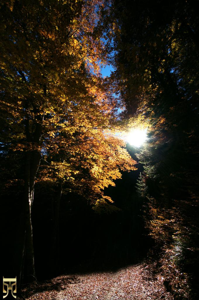 De l'or dans les branches