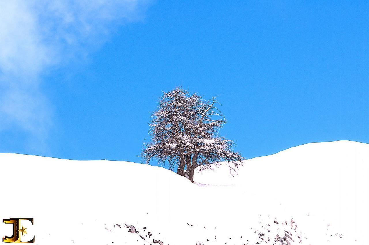 L'arbre égaré