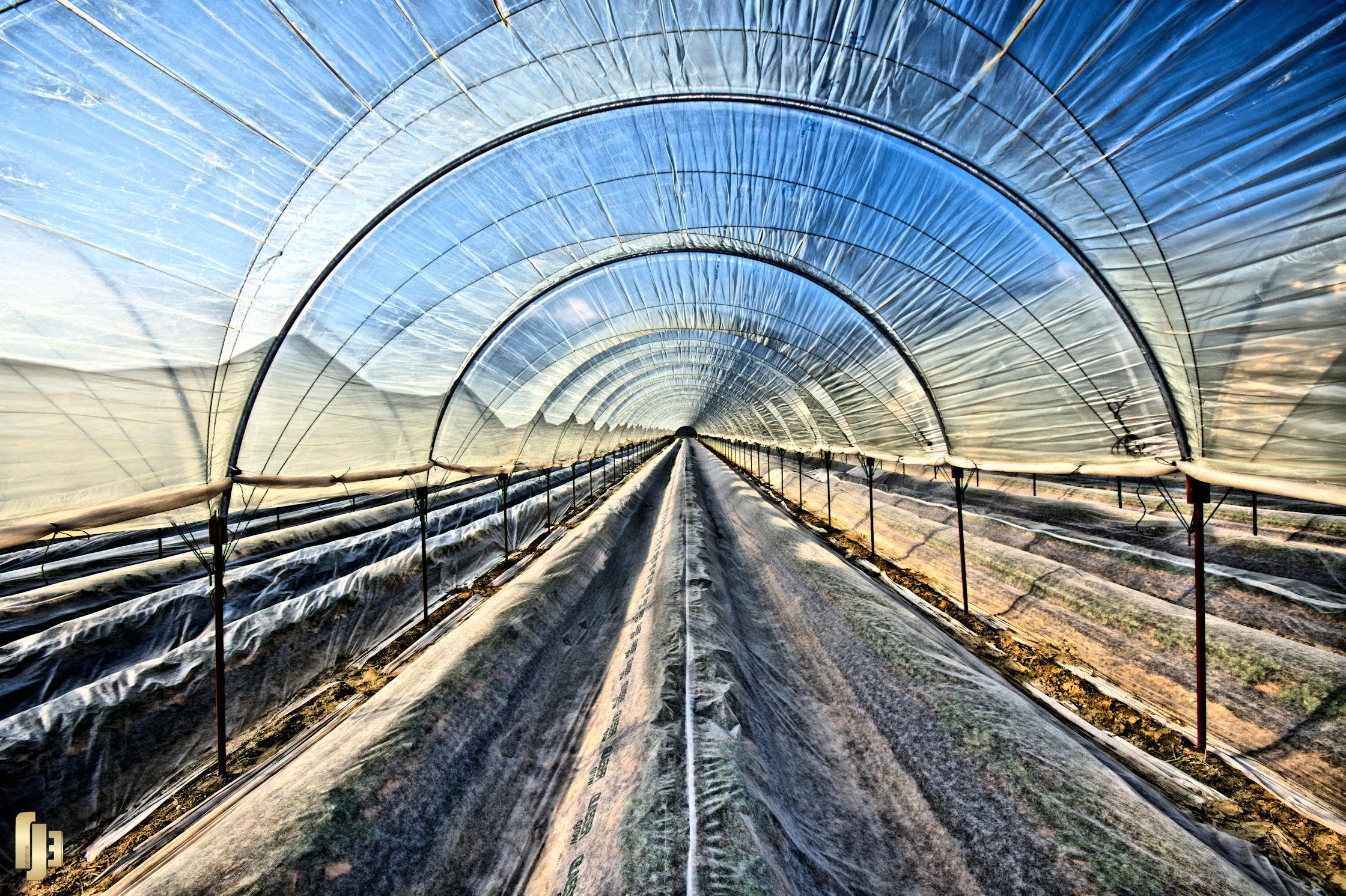 Tunnel fruitier