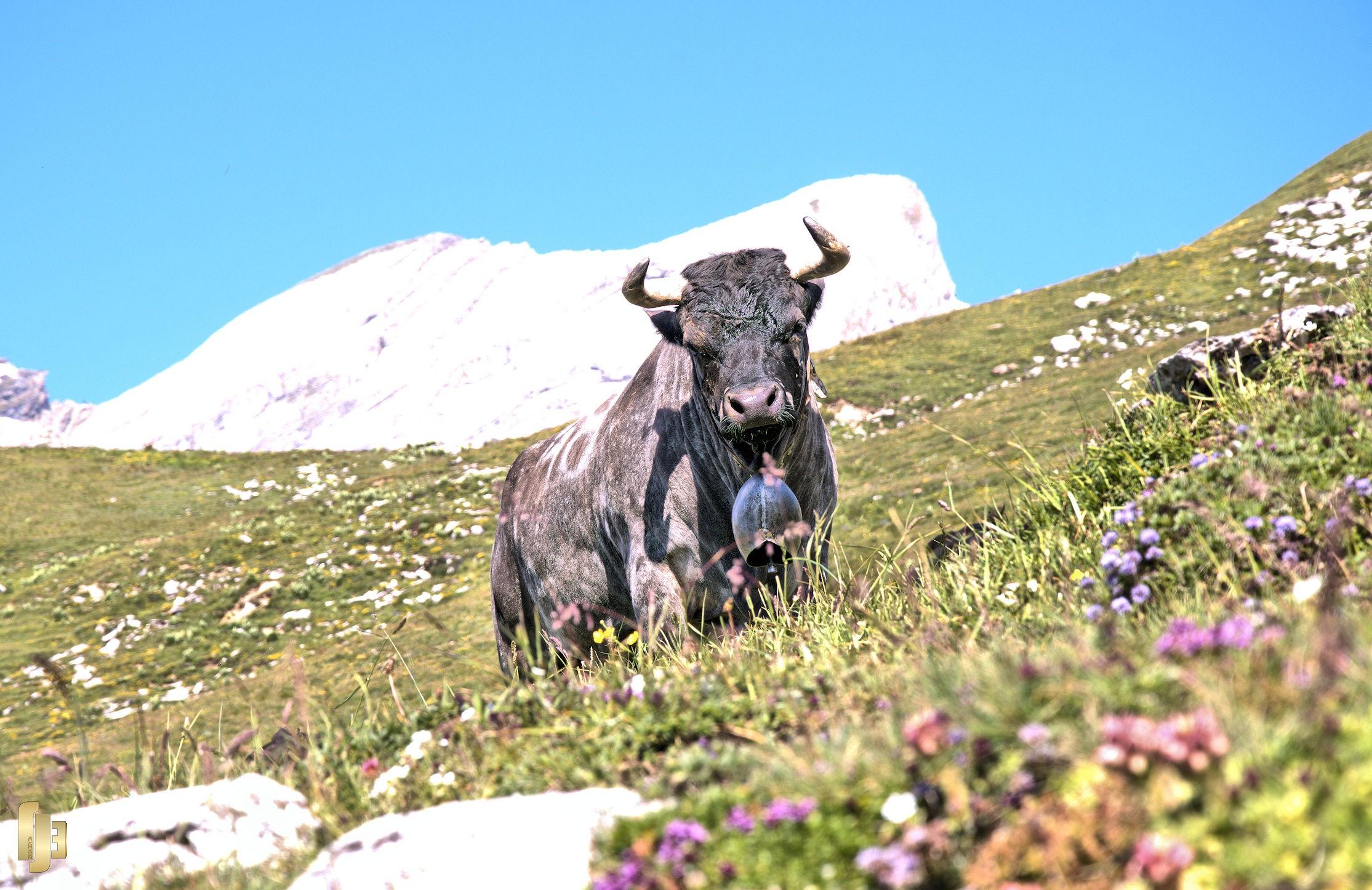 Un été sur l'alpe