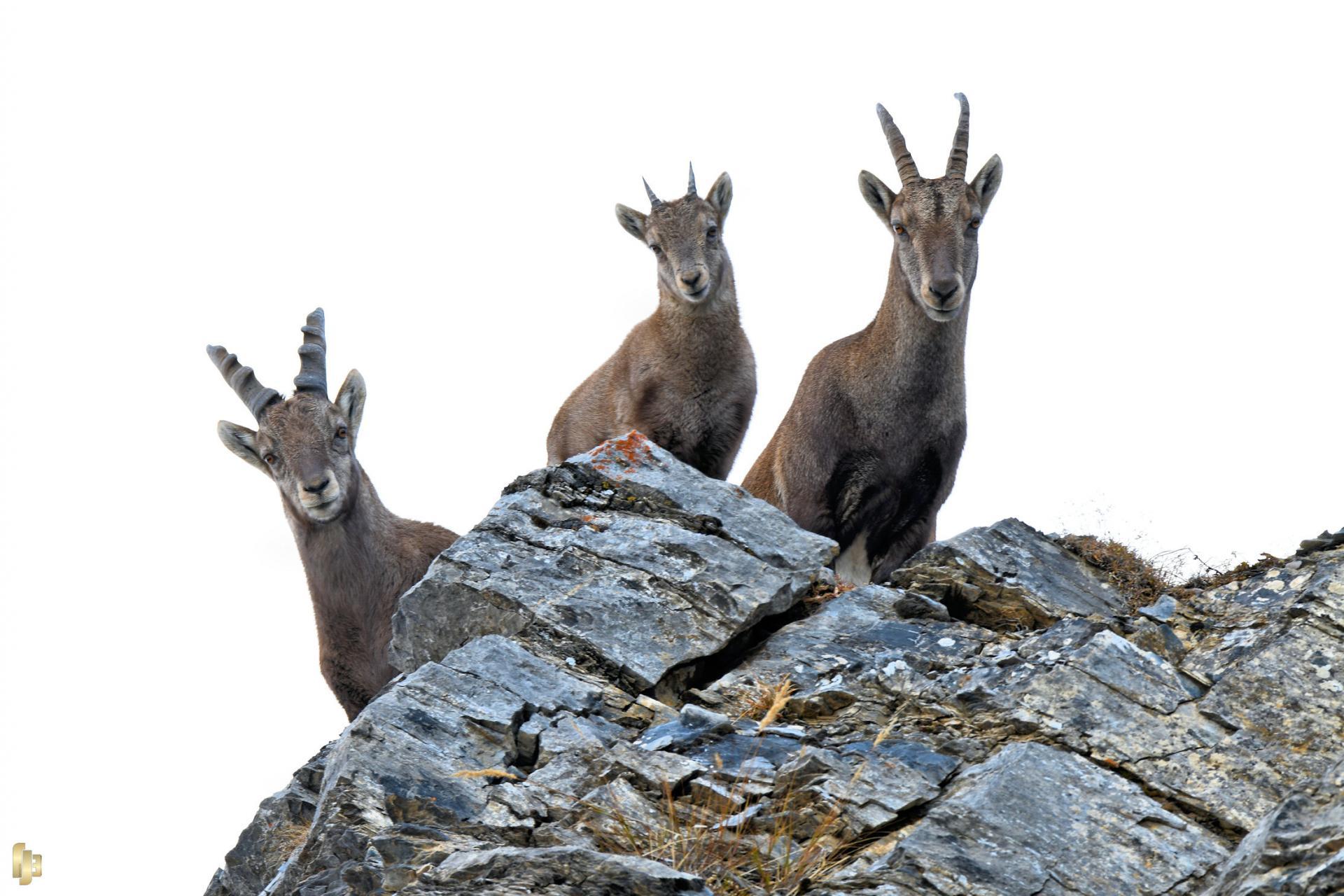Trilogie alpine